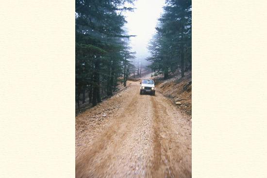 יערות ארזים, הרי הטרוס, טיולים בטורקיה